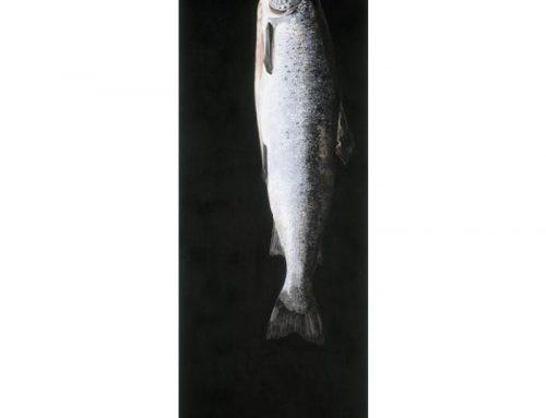 salmon_neo